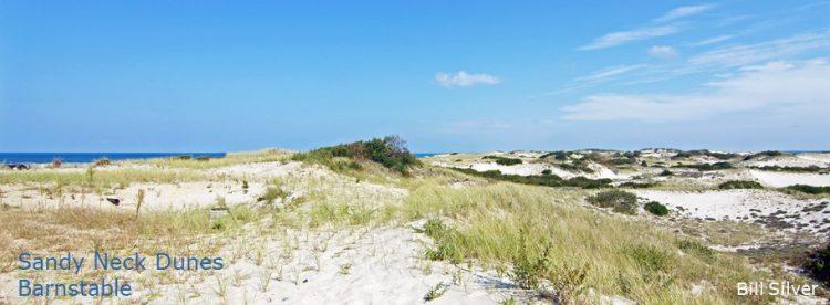 Cape Cod Pics (9)
